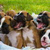 How To Care For Puppies – Tips For Any Breed