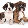 Awesome Puppy Care Tips For Different Breeds