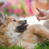 Essential Pointers On Small Dog Training