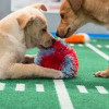 An Introduction To The World Of Puppy Care Games