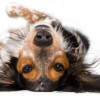 Adult Dog Training Can Be Easy & Fun – Follow These Tips