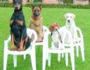 Secrets To Dog Training Only Top Trainers Know