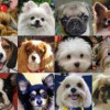 Read This Small Dog Breed Info Before Adopting Or Purchasing