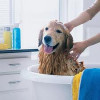 Dog Grooming Tips For New Dog Owners