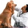 Dog Health Problems That Could Plague Your Beloved Pet