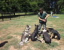 Free Dog Training You Must Know About