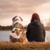 How to Train an Aggressive Dog