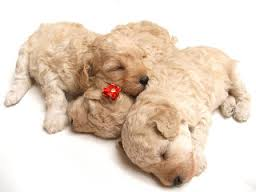 Newborn Puppy Care