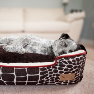 Pet Lounge Bed