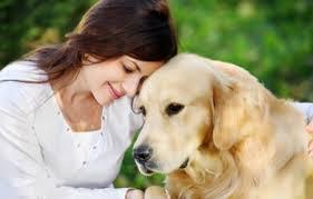 Senior dog care