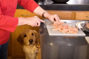 Best Homemade Dog Food