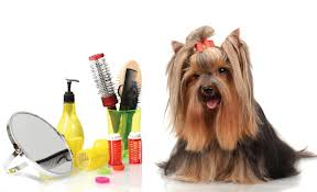 Grooming for dogs