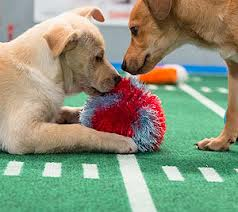 puppy care games